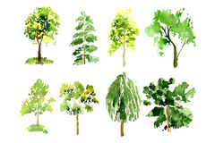 Collection of trees painted watercolor Stock Photos