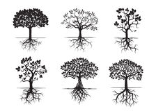 Collection of Trees and Roots. Vector Illustration. Stock Photos