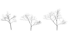 Collection of trees silhouettes without leaves. Branches Royalty Free Stock Image