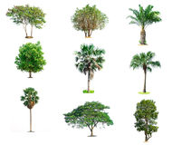 Collection trees on white background. Of isolated Stock Photography