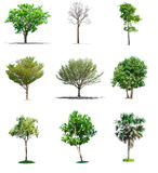 Collection trees on white background. Of isolated Stock Image