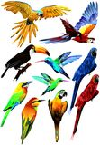 Collection of tropical birds. (Vector) Stock Photography