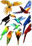 Collection of tropical birds. (Vector) Stock Photography