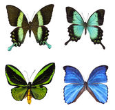 Collection of tropical butterflies Stock Photos