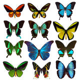 Collection of tropical butterflies Royalty Free Stock Images