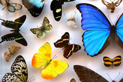 Collection of tropical butterflies Stock Images