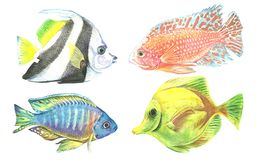 A collection of tropical fish painted with watercolor. Illustrations of marine inhabitants on a white background. A set of isolated drawings. Undersea world Royalty Free Stock Photography