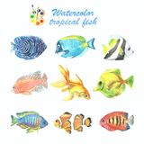A collection of tropical fish painted with watercolor. Illustrations of marine inhabitants on a white background. A set of isolated drawings. Undersea world Stock Image
