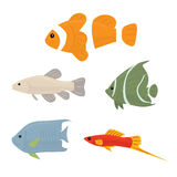 Collection of tropical fish. Set of vector icons Isolated on white background Royalty Free Stock Photography