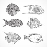 Collection of tropical fish.Vintage set of hand drawn marine fauna. Vector illustration in line art style.Design for summer beach, decorations.Tattoo design Royalty Free Stock Images