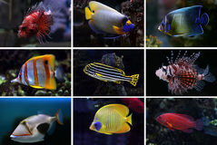 Collection of tropical fishes royalty free stock photography