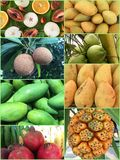 Collection of tropical fruits backgrounds. Stock Image