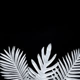 Collection of tropical leaves,foliage plant in black and white color with space background.Abstract leaf decoration design. Exotic nature for cover template stock image