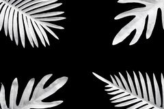 Collection of tropical leaves,foliage plant in black and white color with space background.Abstract leaf decoration design. Exotic nature for cover template royalty free stock image