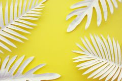 Collection of tropical leaves,foliage plant with color space background.Abstract leaf decoration design.Exotic nature art. Collection of tropical leaves,foliage stock image