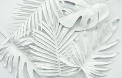 Collection of tropical leaves,foliage plant in white color.Abstract leaf decoration design background. Exotic nature for cover template royalty free stock photo