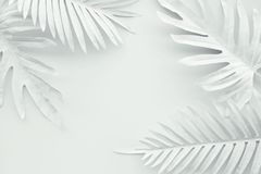 Collection of tropical leaves,foliage plant in white color with space background.Abstract leaf decoration design.Exotic nature art. Collection of tropical leaves royalty free stock images