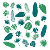 Collection of tropical leaves. Nature elements for your design Royalty Free Stock Image