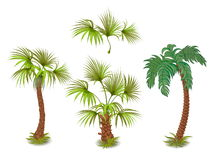 Collection of tropical palm trees Royalty Free Stock Images