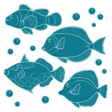 Collection of tropical reef fish. EPS10. Collection of tropical reef fish. Vector illustration Stock Photography