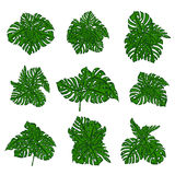 The collection of tropical wild bushes of fern to create a cartoon's background in computer graphics. The elements Royalty Free Stock Photography