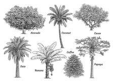 Collection tropicale d'arbre fruitier, illustration, dessin, gravure, encre, schéma, vecteur illustration libre de droits