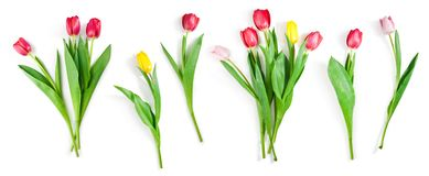 Tulip flowers set isolated on white with clipping path included. Collection of tulip flowers isolated on white background with clipping path included stock photography