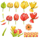 Collection of tulip Stock Photo