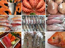 Collection of uncooked seafood octopus, shrimp, shellfish, muss Stock Photography