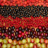 Collection of variety fruits currants, gooseberries, raspberrie Stock Image