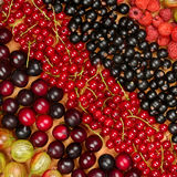 Collection of variety fruits currants, gooseberries, raspberrie Royalty Free Stock Photography