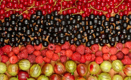 Collection of variety fruits currants, gooseberries, raspberrie Royalty Free Stock Images