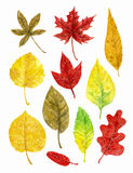 Watercolor set autumn leaves Royalty Free Stock Photography