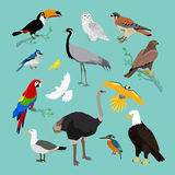 Collection of Various Birds Flat Design Stock Photography