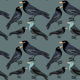 Collection of various black birds seamless pattern. Vector illustration on dark green background. Hand drawn collection of various black birds with orange beaks Stock Photos