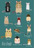 Collection of Various breeds of mice and rats with names. Collection of breeds of mice and rats with names on blue backgrounds vector illustration