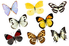 Collection of various butterflies on white Royalty Free Stock Image