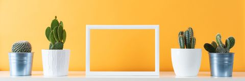 Potted cactus house plants on white shelf against pastel mustard colored wall and picture frame mock up banner. Collection of various cactus plants in different stock photography