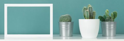 Collection of various cactus plants in different pots. Potted house plants on white shelf against turquoise colored wall. royalty free stock photos