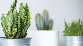 Collection of various cactus and succulent plants in different pots. Potted cactus house plants. Collection of various cactus and succulent plants in different Royalty Free Stock Photo
