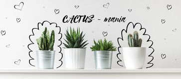 Collection of various cactus and succulent plants in different pots. Potted cactus house plants. Collection of various cactus and succulent plants in different Royalty Free Stock Images