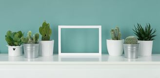 Various cactus and succulent plants in different pots. Potted house plants on white shelf against turquoise colored wall. Collection of various cactus and stock photo
