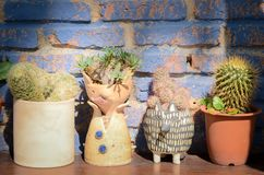 Collection of various cactus and succulent plants in different pots. The rustic interior home decor royalty free stock photos