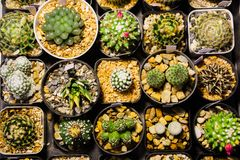 Collection of various cactus and succulent plants in different pots selling at night market. Top view stock image