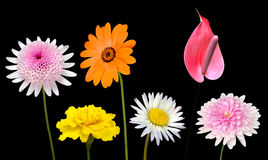Collection of Various Colorful Flowers Isolated on Black Royalty Free Stock Images