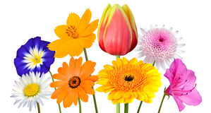 Collection of Various Colorful Flowers Isolated on White Stock Photography