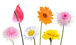 Collection of Various Colorful Flowers Isolated on White Royalty Free Stock Photo
