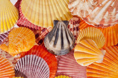 Collection of various colorful seashells Stock Photo