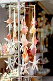 Collection of various colorful seashells and starfish tied each other by string Royalty Free Stock Image