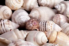 Collection of various colorful seashells on white background Royalty Free Stock Photography